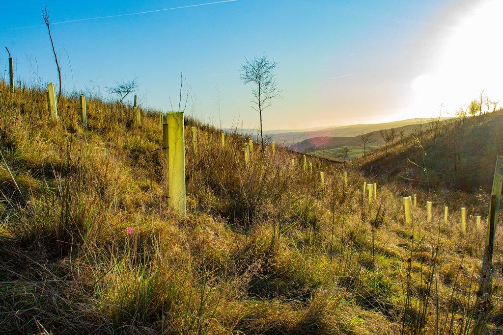 Yorkshire Woodland Management - Carbon Neutral Brittan